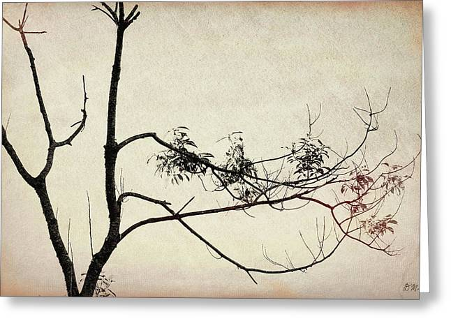 Greeting Card featuring the photograph Tree Branches IIi by David Gordon