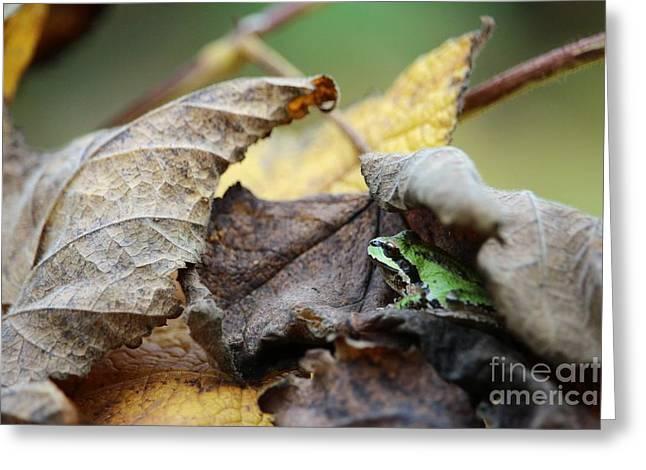 Tree Frog Seeking Shelter Greeting Card