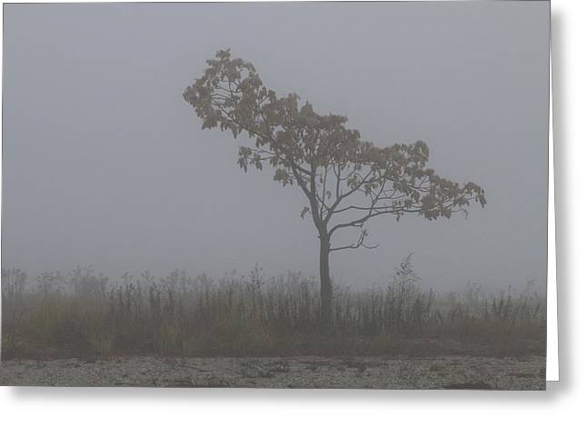 Tree In Fog Greeting Card