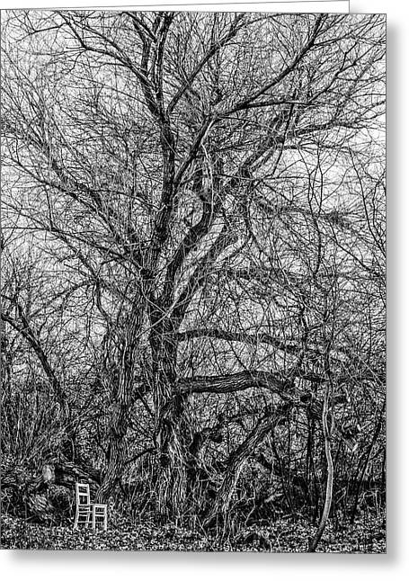 Mother Tree / The Chair Project Greeting Card