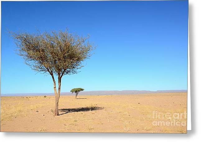 Tree In Sahara Desert In Morocco Near Greeting Card