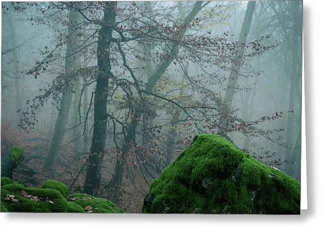 Tree On The Rocks Greeting Card