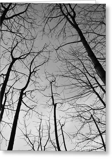 Greeting Card featuring the photograph Tree Series 2 by Jeni Gray