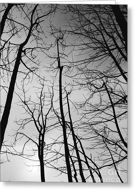 Greeting Card featuring the photograph Tree Series 3 by Jeni Gray