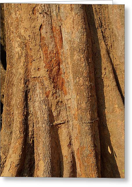 Tree Trunk And Bark Of Chambak Greeting Card