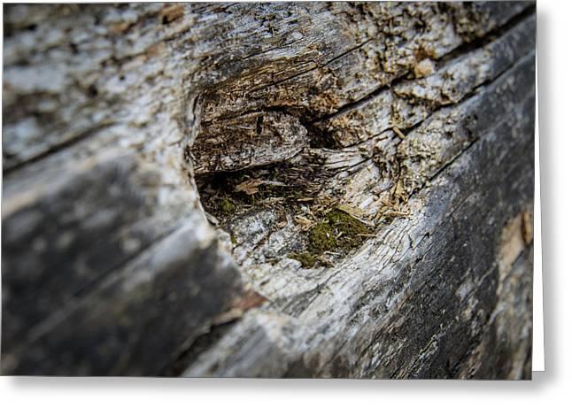Tree Wood Greeting Card