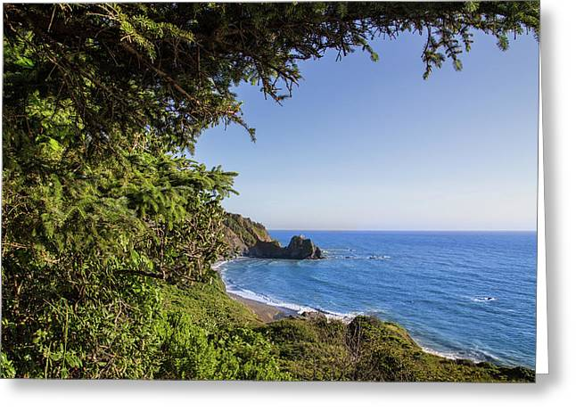 Trees And Ocean Greeting Card