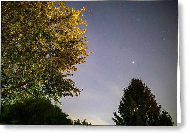 Trees And Stars Greeting Card