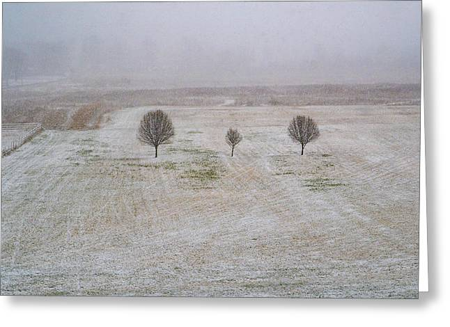 Trees In Snowstorm Greeting Card