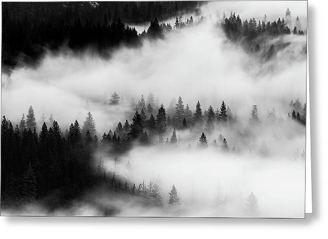 Greeting Card featuring the photograph Trees In The Mist 1 by Stephen Holst