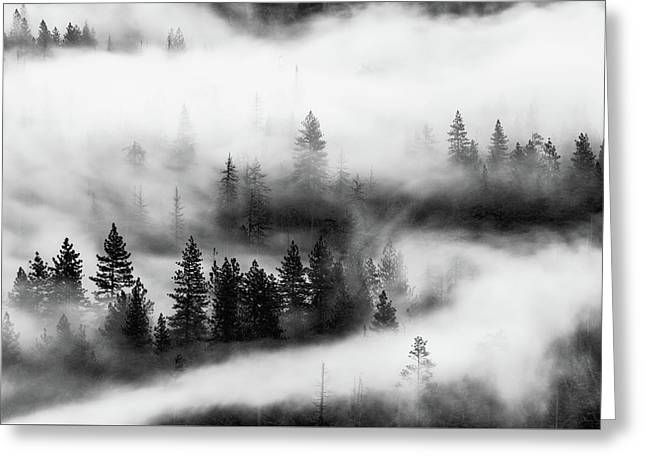 Greeting Card featuring the photograph Trees In The Mist 2 by Stephen Holst