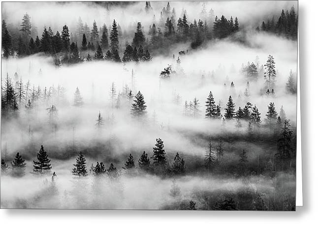 Greeting Card featuring the photograph Trees In The Mist 3 by Stephen Holst