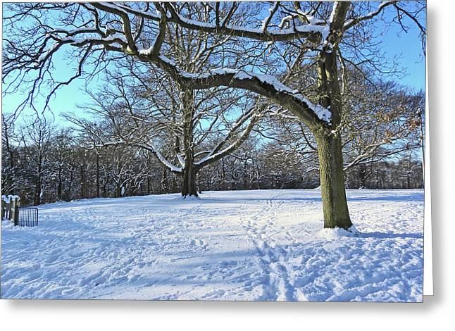 Trees In The Snow Greeting Card