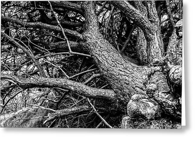 Trees, Leaning Greeting Card