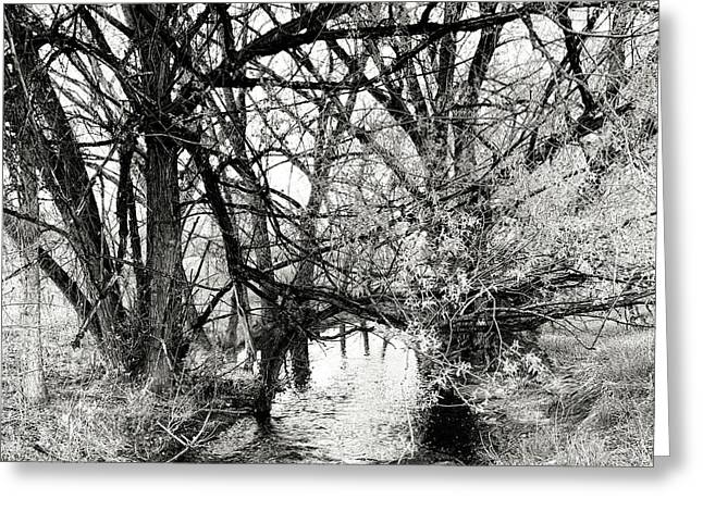 Trees Over Creek Greeting Card