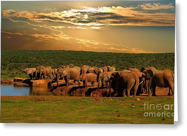 Troop, Herd Of Elephant, Loxodonta Greeting Card