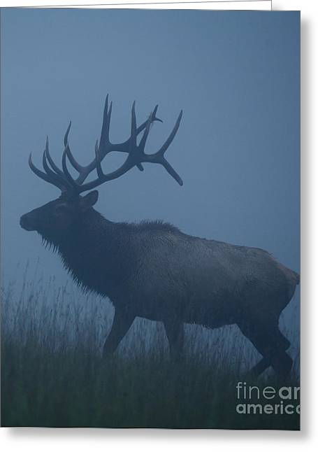 Trophy Bull Elk With Huge Record Class Greeting Card