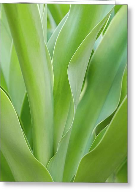 Tropical Leaf Greeting Card