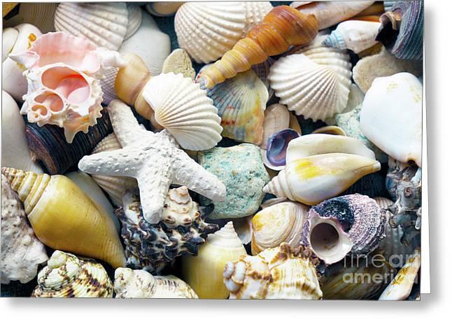 Greeting Card featuring the photograph Tropical Treasure Seashells B91218 by Mas Art Studio