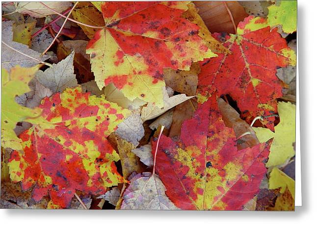 True Autumn Colors Greeting Card