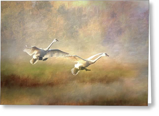 Trumpeter Swan Landing - Painterly Greeting Card