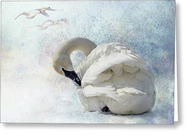 Greeting Card featuring the photograph Trumpeter Textures #2 - Swan Preening by Patti Deters