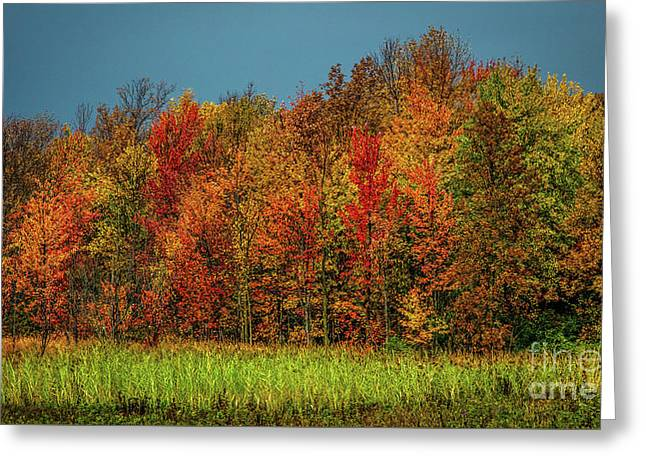 Tug Hill Colors Greeting Card