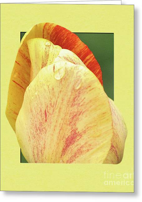 Tulip Petals Escaping Greeting Card