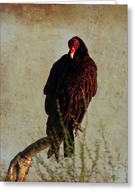 Turkey Vulture Vintage Greeting Card