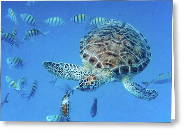 Turning Turtle Greeting Card