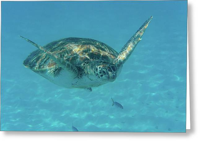 Turtle Approaching Greeting Card