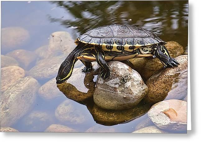 Turtle Drinking Water Greeting Card