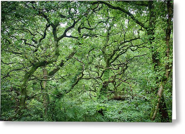 Twisted Forest Full Color Greeting Card