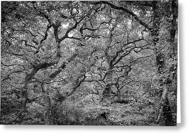 Twisted Forest Greeting Card