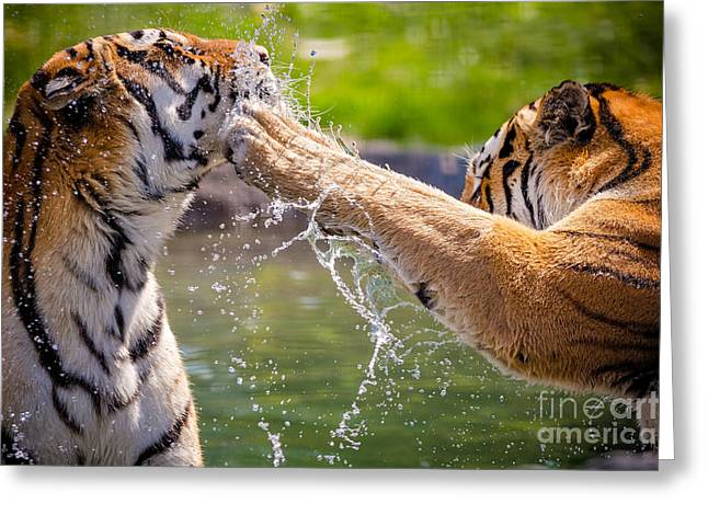Two Adult Tigers At Play In The Water Greeting Card