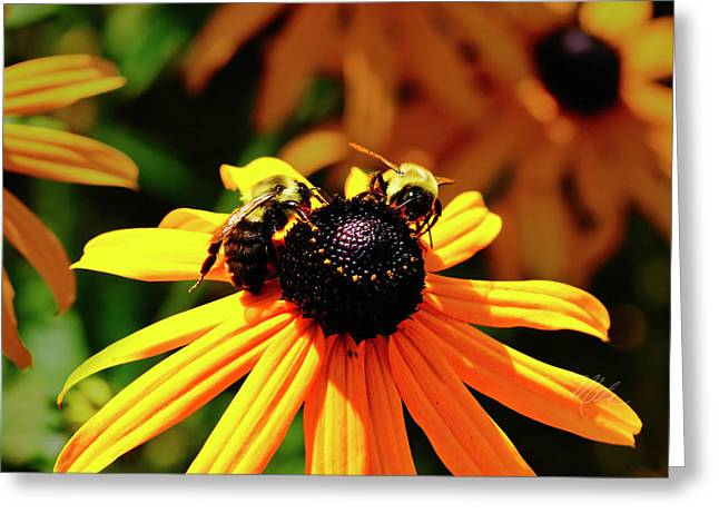 Greeting Card featuring the photograph Two Bees by Meta Gatschenberger
