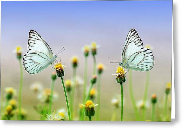 Two Butterflies Greeting Card