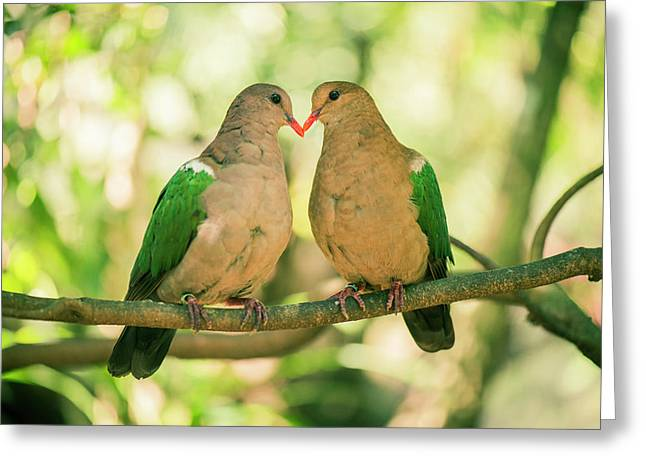 Two Colourful Doves Resting Outside On A Branch. Greeting Card
