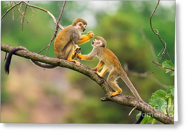 Two Common Squirrel Monkeys Saimiri Greeting Card
