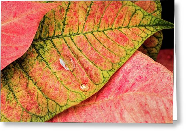 Two Drops Greeting Card
