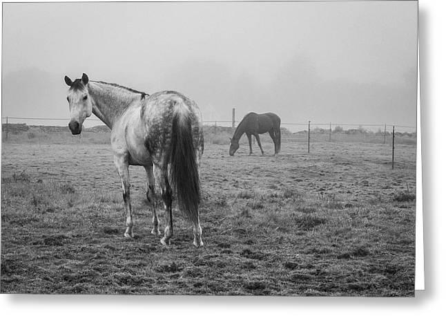 Two Horses Bw Greeting Card by David Gordon