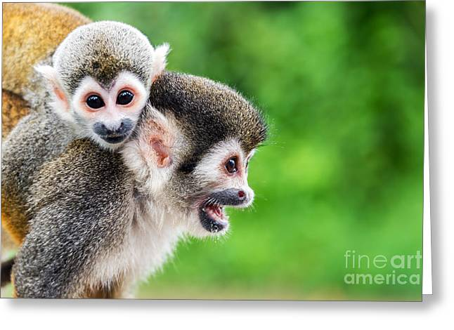 Two Squirrel Monkeys, A Mother And Her Greeting Card