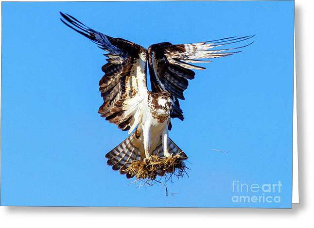 Two  Talons Full Greeting Card