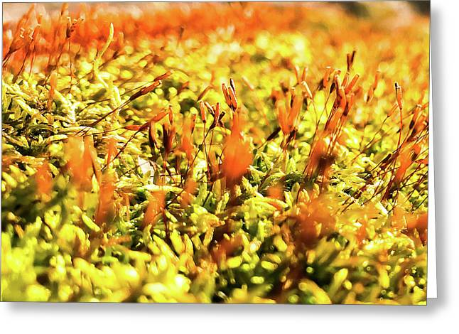 Greeting Card featuring the photograph Orange Moss 2 by Atousa Raissyan