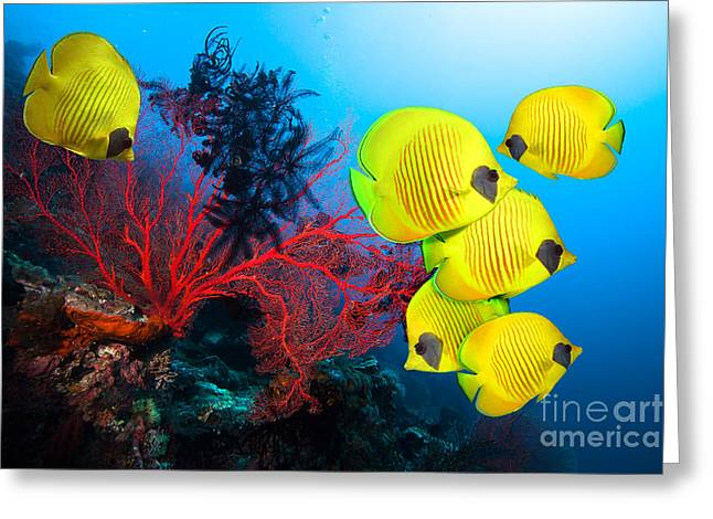 Underwater Image Of Coral Reef And Greeting Card