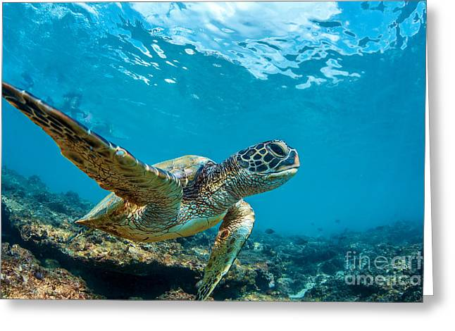 Underwater Marine Wildlife Postcard. A Greeting Card