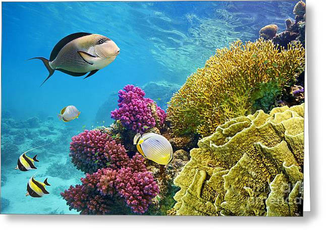 Underwater Scene With Coral Reef And Greeting Card