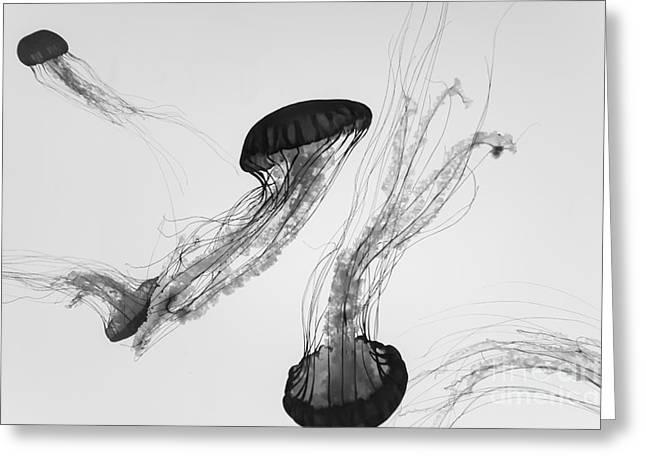 Underwater View Of Jellyfish Greeting Card
