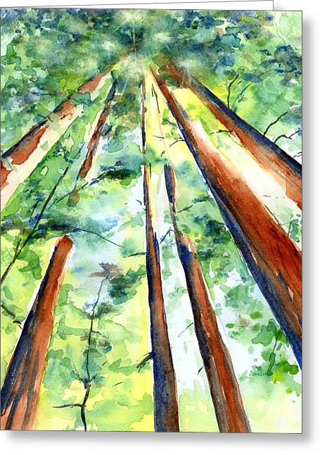 Up Through The Redwoods Greeting Card
