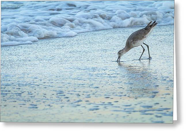 Usa, Florida A Willet Digs In The Sand Greeting Card by Margaret Gaines